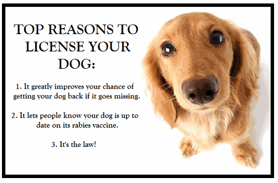 TOP REASONS TO LICENSE YOUR DOG